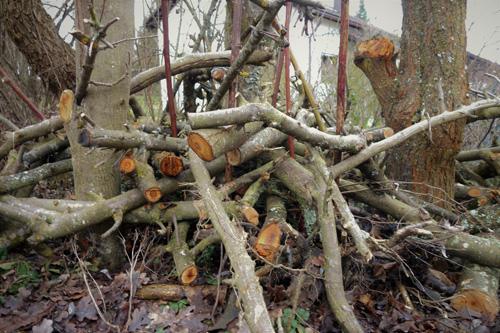 Ein Haufen aus liegendem und stehendem Totholz von Obstbäumen dient Insekten als Unterschlupf und Nistmöglichkeit.